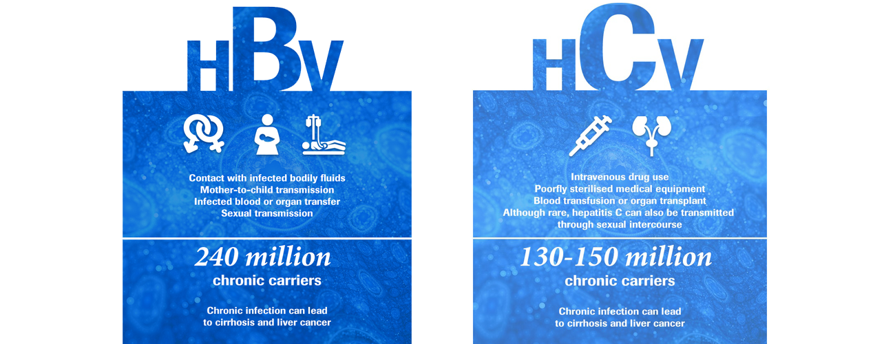 Hepatitis B facts; Hepatitis C facts