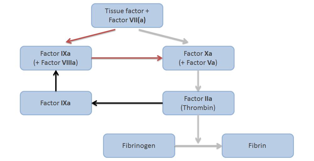 Simplified coagulation